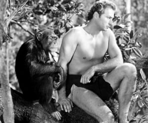 Cheetah, Chimpanzee Star of Early 'Tarzan' Films, Dead at 80