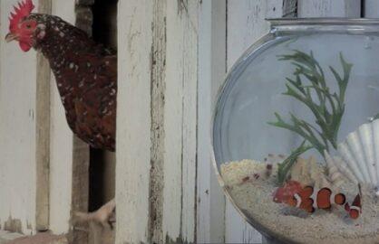 fish bowl nat geo wild