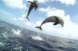 dolphins spy in the pod discovery channel