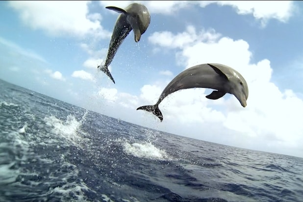 Discovery uses robotic fish and hidden cameras on new for Fishing shows on discovery channel