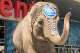 Ringling Bros. Elephant Predicts FIFA World Cup Winner At STAPLES Center Los Angeles