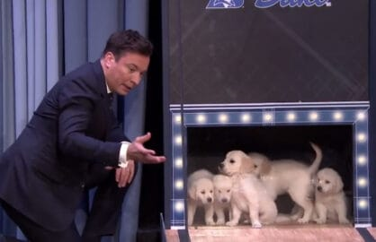 Jimmy Fallon puppies