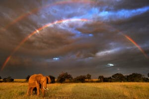 African elephant in front of double rainbow, Masai Mara, Kenya