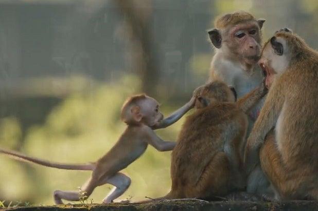 monkey-kingdom-movie-image-3