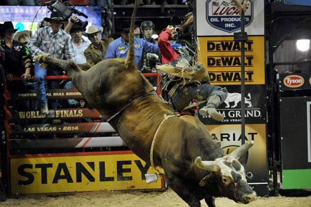 A What Bull Expect To Rider Hookup When