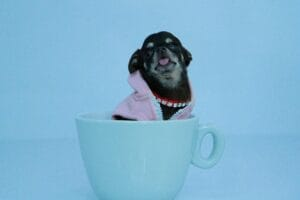puppy in a teacup