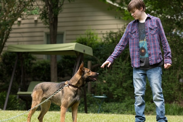 Max Review Old Fashioned Tale Of A Heroic Mutt Gets Surprisingly Dark
