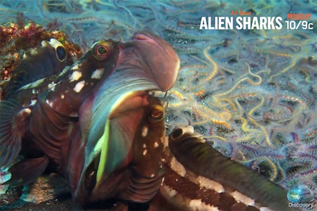 Shark Week Reveals First Look of Swell Shark in 'Alien Shark: Close Encounters' Clip (Exclusive Video)