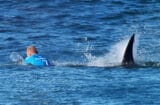 Pro surfer Mick Fanning narrowly escapes shark (World Surf League)