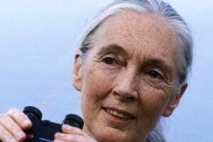 Jane Goodall Nat Geo