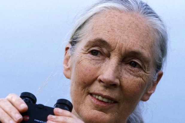 Jane Goodall Thinks Cecil The Lion S Killer Has A Very