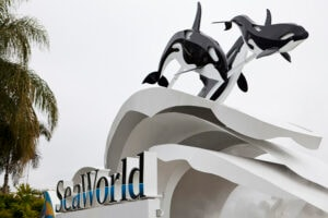 ORLANDO -  FEBRUARY 24:  The sign at the entrance to SeaWorld February 24, 2010 in Orlando, Florida. A female trainer who presumably slipped and fell in to a holding tank was fatally injured after she was attacked by an orca.  This is the third human death associated with the killer whale according to the Humane Society of the United States. (Photo by Matt Stroshane/Getty Images)