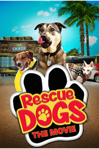animals rescue