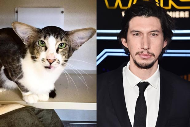 Adam Driver Cat
