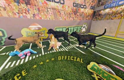Puppy Bowl VR