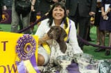 CJ the Pointer at Westminster Dog Show