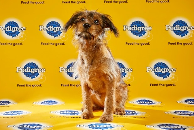 Puppy Bowl Roster 14