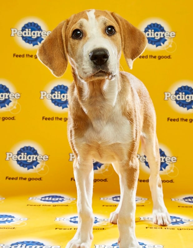 Puppy Bowl Roster 18