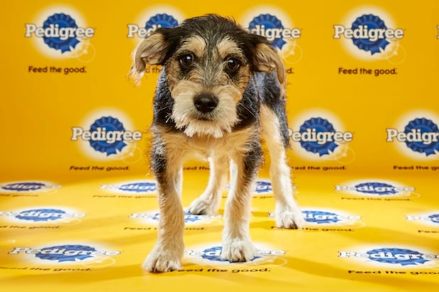 Puppy Bowl Roster 21
