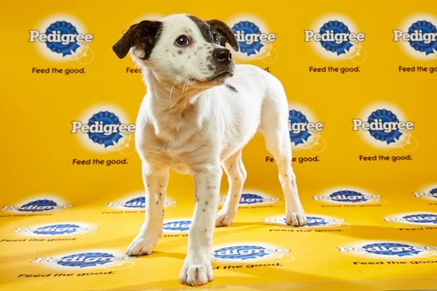Puppy Bowl Roster 25