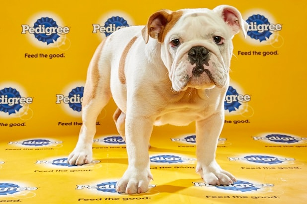Puppy Bowl Roster 27