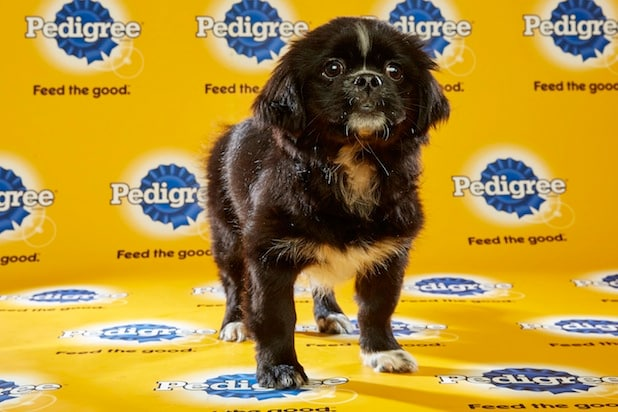 Puppy Bowl Roster 29