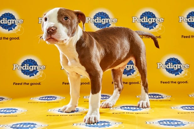 Puppy Bowl Roster 32