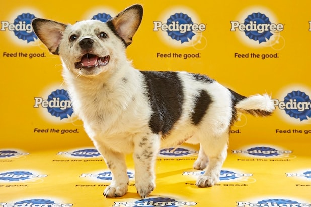 Puppy Bowl Roster 35