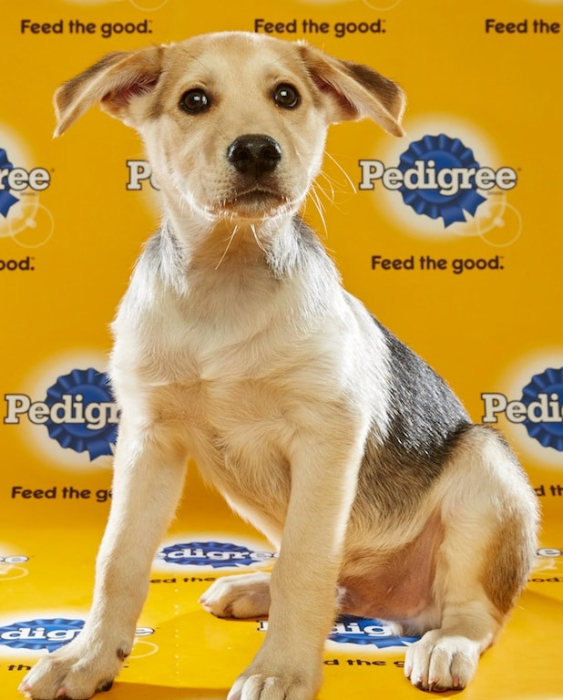 Puppy Bowl Roster 36