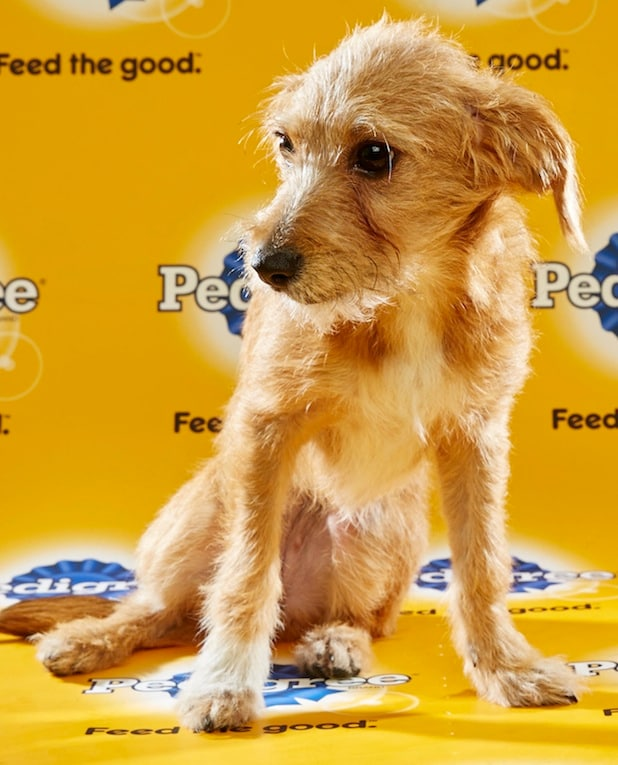 Puppy Bowl Roster 38