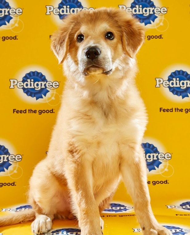 Puppy Bowl Roster 39