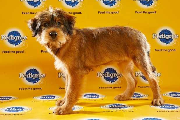 Puppy Bowl Roster 40