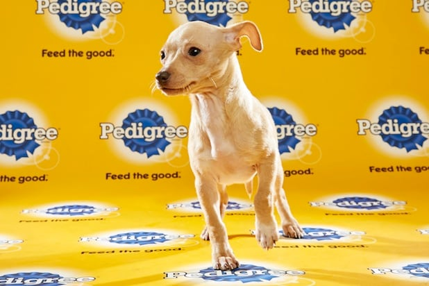 Puppy Bowl Roster 41