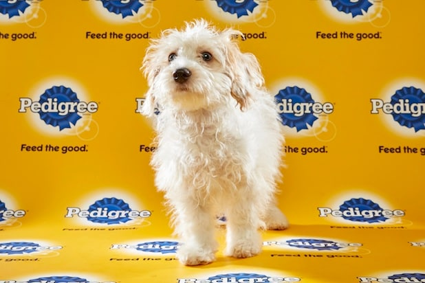 Puppy Bowl Roster 43