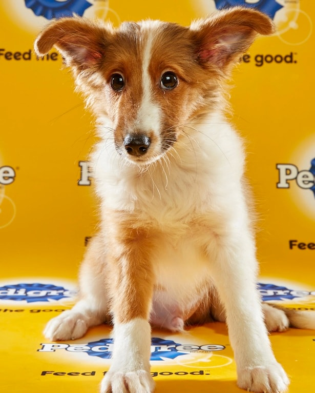 Puppy Bowl Roster 46