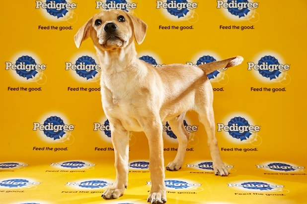 Puppy Bowl Roster 47