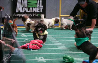 Puppy Bowl on Animal Planet