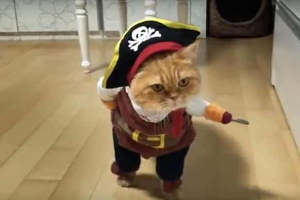 Cats Get Cancer From Secondhand Smoke Commercial