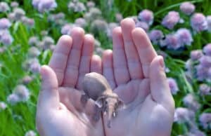 Magic Leap is a secretive start up in what's known as augmented reality, which overlays images on the actual world around the viewer augmented reality