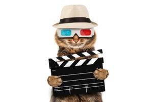 3d cat lek movie theaters studios