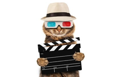 3d cat lek movie theaters studios