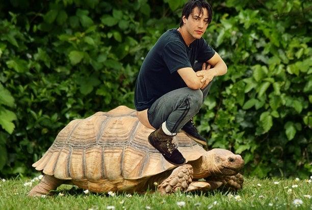 keanu reeves turtle