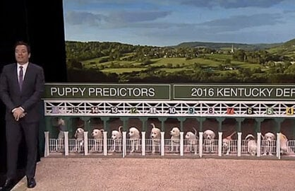 Puppy Predictor Jimmy Fallon