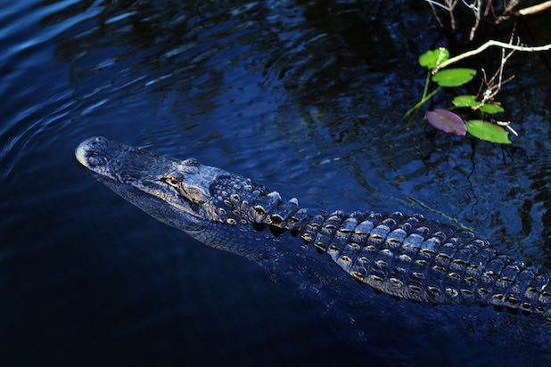 Florida Scales Back Everglades Sugar Land Deal