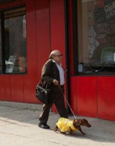Wiener-Dog_DeVito.jpg