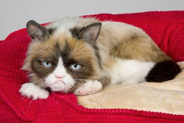 Grumpy Cat wins £500k in copyright battle with coffee chain