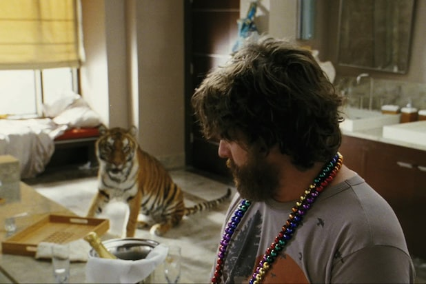 the hangover tiger zach galifianakis