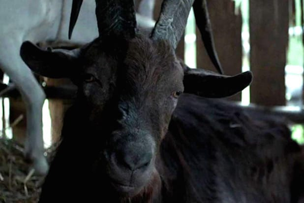 evil goat the witch