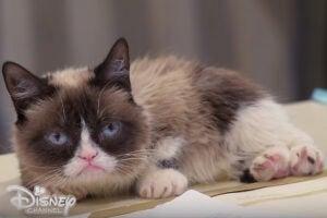 Grumpy Cat Bizardvaark