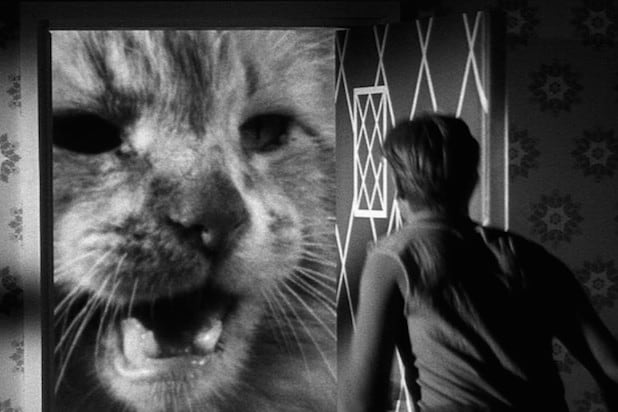 Image result for cat in incredible shrinking man